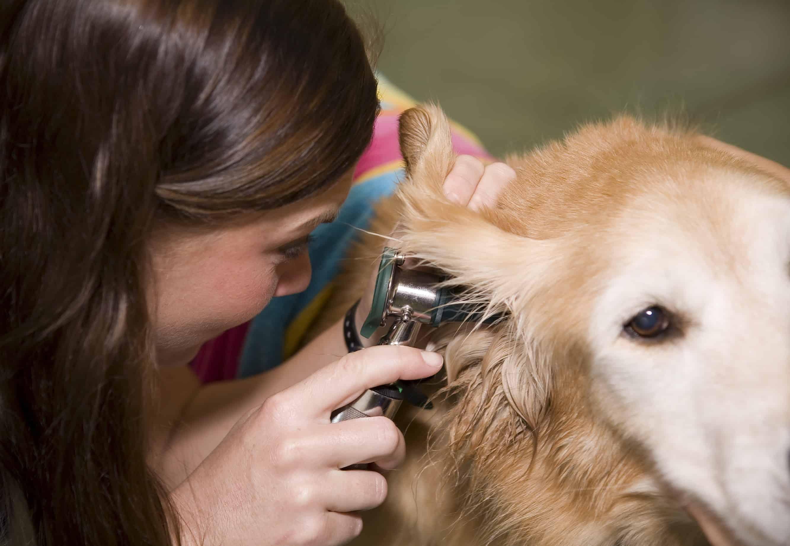 Alberta-Veterinary-Medical-Association-(ABVMA)